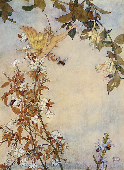 Ariel and the Bee. Illustration to The Tempest -  by Edmund Dulac