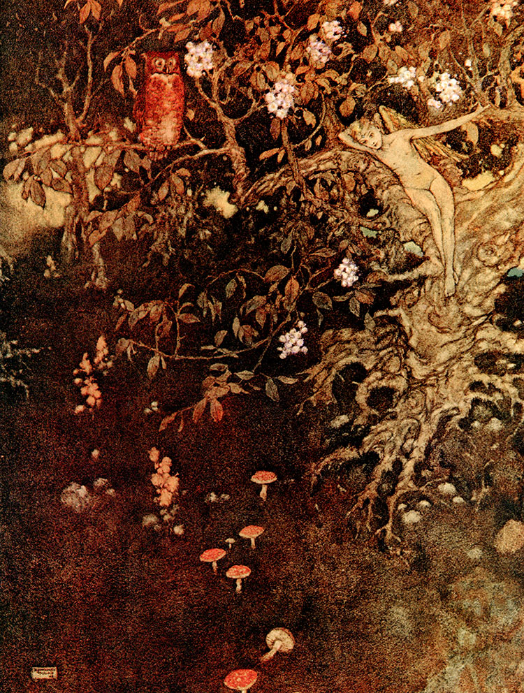 Ariel in the Tree. Illustration to The Tempest -  by Edmund Dulac