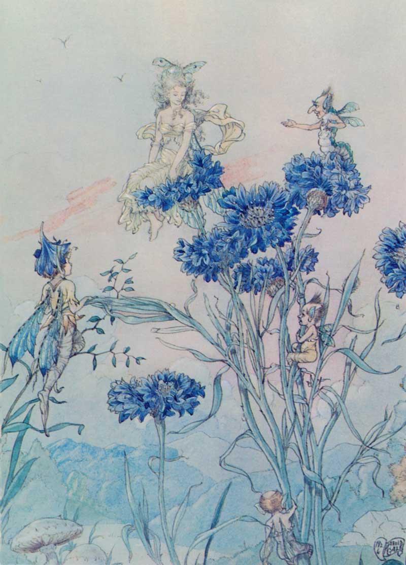 Cornflower Fairy by Harold Gaze, circa 1918