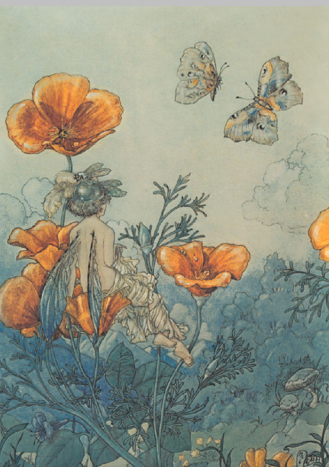Poppy Fairy, Harold Gaze
