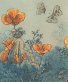 Poppy Fairy by Harold Gaze art print